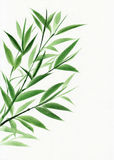 Young green bamboo Stock Images
