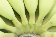 Young green banana . Stock Image