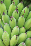 Young green banana on tree Stock Images