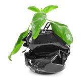 Young green basil in crushed tin can isolated on white Stock Images