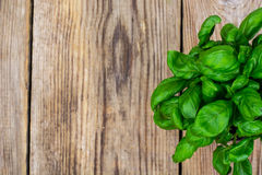 Young green basil on an old wooden table. Studio Photo Royalty Free Stock Photo