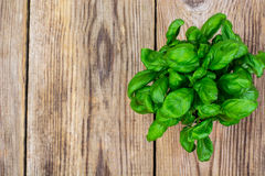 Young green basil on an old wooden table. Studio Photo Stock Images