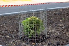 Young green bush plant fenced in mesh. Close up stock image
