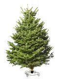 Young green Christmas tree. Save our planet , buy  your christmas tree with roots and plant it after the holiday Stock Photo