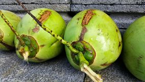 Young green coconuts with nutrient, health benefits, dietary fib. This is young green coconuts with nutrient, health benefits, dietary fiber and high Stock Photography