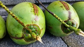 Young green coconuts. This is young green coconuts with nutrient, health benefits, dietary fiber and high electrolytes Royalty Free Stock Photos
