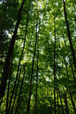 Young green forest Royalty Free Stock Photography