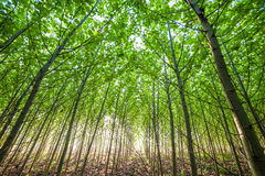 Young Green forest Royalty Free Stock Images