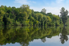 Young green forest reflected in the lake water Royalty Free Stock Images