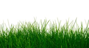 Young green grass royalty free stock images