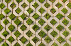 Young green grass grows from the concrete structur Royalty Free Stock Photo