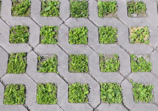 Young green grass grows from the concrete structure Stock Photos