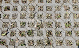 Young green grass grows from the concrete structure Stock Images