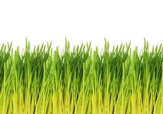 Young Green Grass Pattern - white background Royalty Free Stock Photos