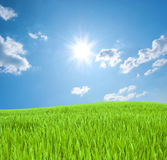 Young green grass and the sky with the sun Royalty Free Stock Photos
