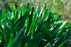 Young Green Grass. Sun day. Awakening of nature royalty free stock image