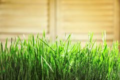 Young green grass with water drops. On blurred background Royalty Free Stock Photography