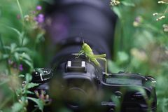The young green grasshopper perched on a camera between the grass stock photo