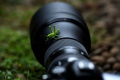 The young green grasshopper perched on a camera lens between the rocks royalty free stock photography