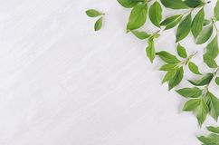 Young green leaves as decorative border on white wood board. Young green leaves as decorative border on white wood board royalty free stock photo