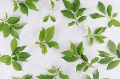 Young green leaves as decorative pattern on white wood board. Young green leaves as decorative pattern on white wood board Stock Image