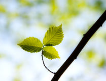 Young green leaves in a forest Stock Photo