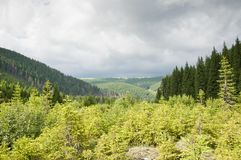 Young green mountain forest in a summer day Royalty Free Stock Image