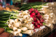 Young green onion bunches Royalty Free Stock Photos