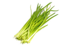 Young green onions Stock Photos