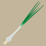 Young green onions Stock Image