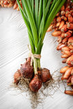 Young green onions with seeds Royalty Free Stock Images