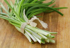 Young green organic onions Royalty Free Stock Photos