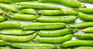 Young green pea pods laid in the rows Royalty Free Stock Photography