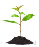 Young green plant stock photography