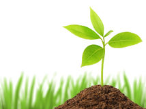 Young green plant. Growing from soil stock images