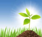 Young green plant. Growing from soil with blue sky on background royalty free stock image
