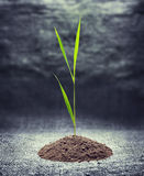 Young green plant. Is growing out of ground Royalty Free Stock Photography