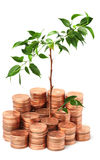 Young green plant in coins Stock Photos