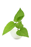 Young green plant in an eggshell Royalty Free Stock Photos