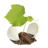 Young green plant in an eggshell Stock Image