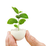 Young green plant in an eggshell Royalty Free Stock Photography