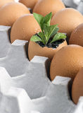 Young green plant grow in eggshell Royalty Free Stock Images