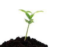 Young green plant Stock Photos