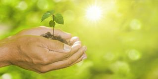Plant in Hands royalty free stock photos
