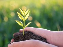 Young green plant in the hands. New life. Ecology concept royalty free stock photos