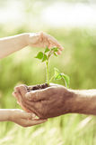 Young Green Plant In Hands Stock Photography