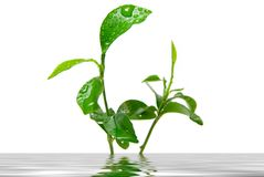 Young green plant leave Stock Photography