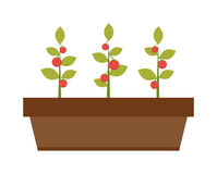 Young green plant seedling growing in a soil flat vector. Royalty Free Stock Photos