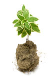 Young green plant in Soil Stock Images