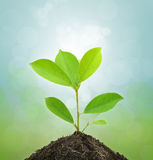 Young Green Plant and Soil. Stock Photos